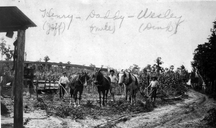 Men and Mules, Henry, John Richard and Wesley Hagin, C 1924